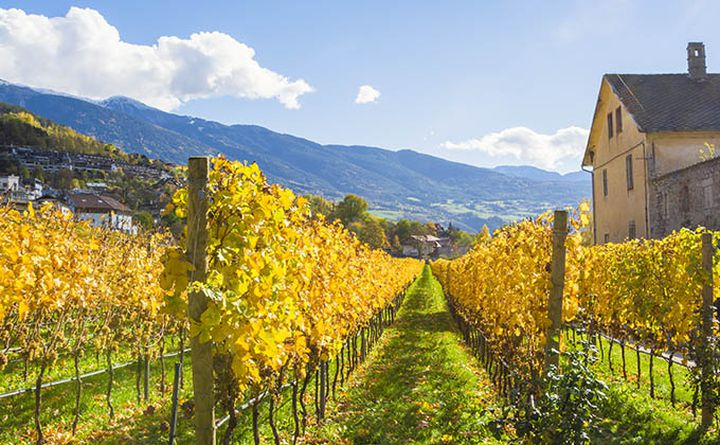 cycling_in_south_tyrol-wineland_680px.jpg
