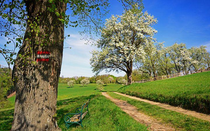 cycling-vienna_wienerwald-640px.jpg