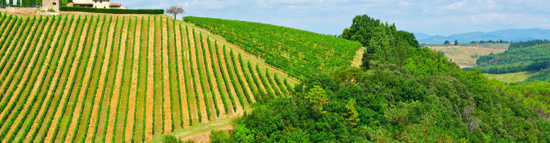 10 amazing cycle routes in wine regions