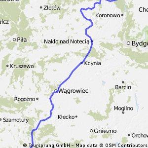 poznan-krówka