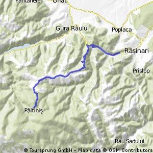 Rasinari - Paltinis