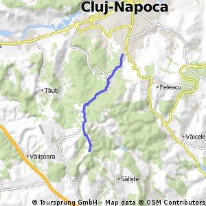 Calea Turzii-Zooparc Cluj