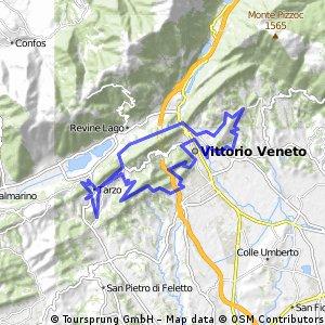 Vittorio Veneto del gatto