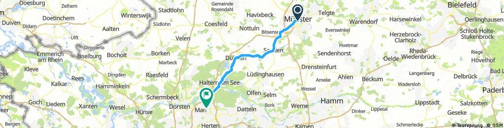 MünsterMarlMS