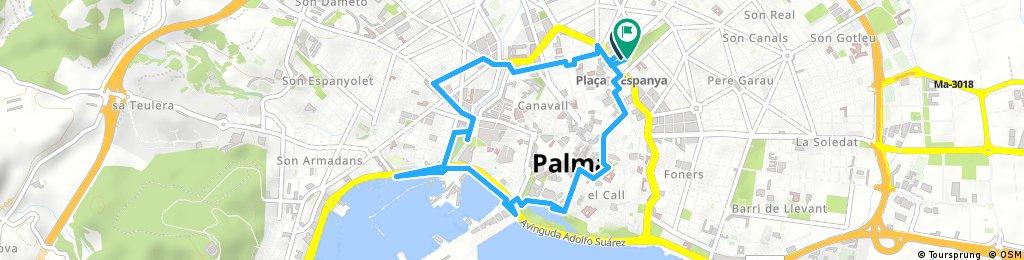 Palma centrum