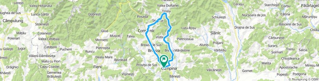 Poiana Campina - Comarnic - Paltinu - Sotriile - Campina