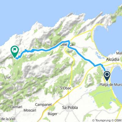 Mallorca Alcudia - Luc