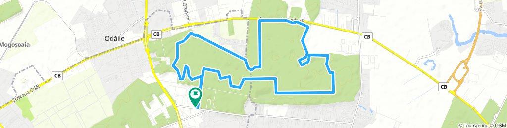 Long Saturday Track In Otopeni