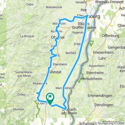 Rheinradweg + Elsässer Weinroute gekürzt