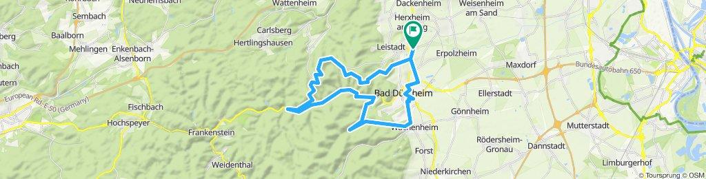 Wald um Bad Dürkheim