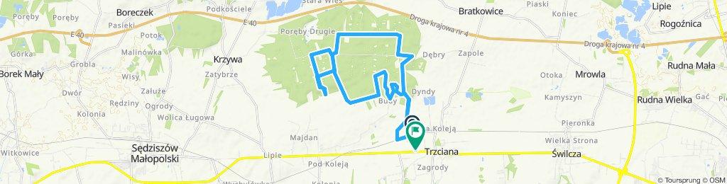 lasy Trzciana